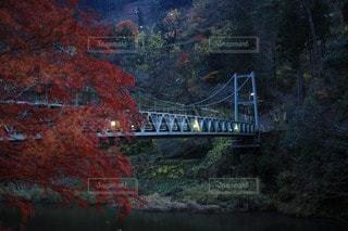 自然の写真・画像素材[66778]