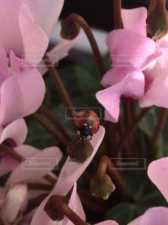 植物にピンクの花の写真・画像素材[1143338]