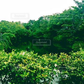 緑の森の写真・画像素材[1213595]