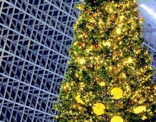 クリスマスツリーの写真・画像素材[3923492]