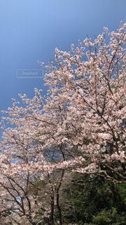 東京青空コレクション003の写真・画像素材[1143391]