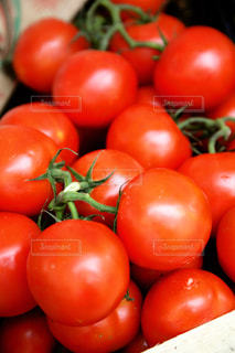 トマト!の写真・画像素材[1150998]