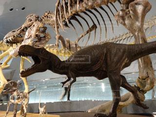 近くに恐竜のアップの写真・画像素材[1143831]