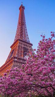 エッフェル塔と桜の写真・画像素材[1144005]