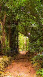 フォレスト内のツリーの写真・画像素材[1161507]