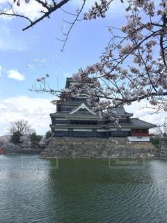 松本城と桜の写真・画像素材[1144468]