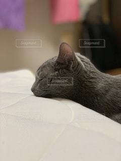 ベッドの上で横になっている猫の写真・画像素材[1650315]