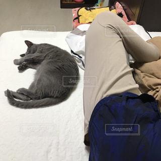 猫の隣に寝ている人の写真・画像素材[1773206]