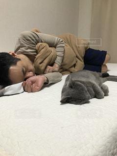 ベッドの上で横になっている人と猫の写真・画像素材[1773207]