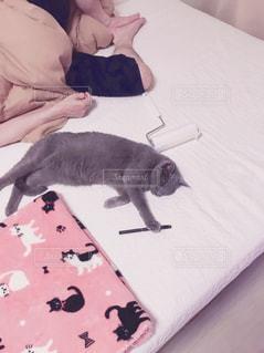 ベッドの上で横になっている猫の写真・画像素材[1773218]