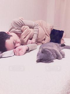 ベッドの上で横になっている人と猫の写真・画像素材[1773220]