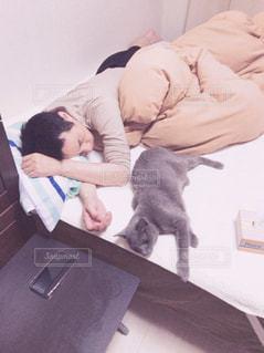 ベッドの上で横になっている猫と人の写真・画像素材[1773240]