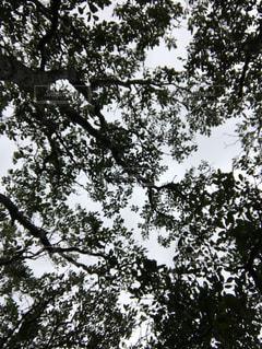 奄美大島の空の写真・画像素材[1144434]