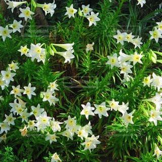 花の写真・画像素材[67824]