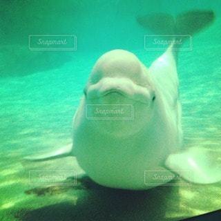 動物の写真・画像素材[12591]