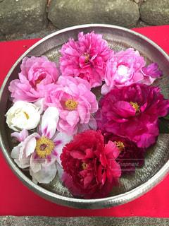 綺麗に飾られた牡丹の花の写真・画像素材[1184594]