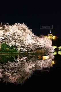鏡桜🌸の写真・画像素材[1145306]