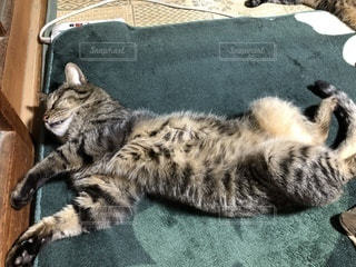 絨毯に横になっている猫の写真・画像素材[1145315]
