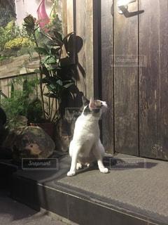 ドアの前に座っている猫の写真・画像素材[1146180]