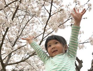 桜!の写真・画像素材[1145874]