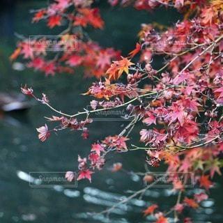 自然の写真・画像素材[53809]
