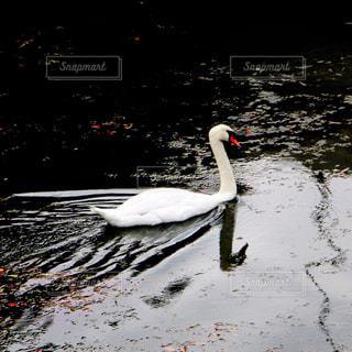 自然の写真・画像素材[232660]