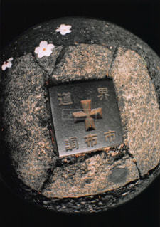 桜が落ちている道の写真・画像素材[1043660]
