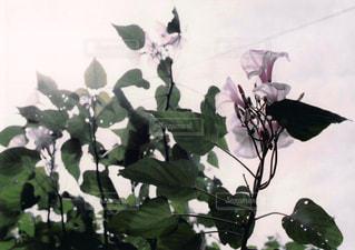 植物の花の写真・画像素材[1044577]