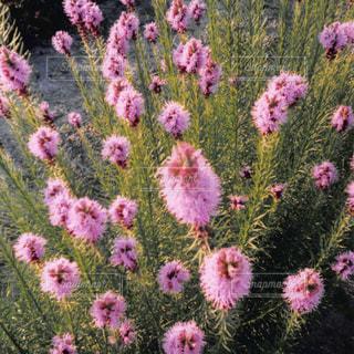 近くの花のアップの写真・画像素材[1054819]