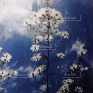 花と空の写真・画像素材[1054849]