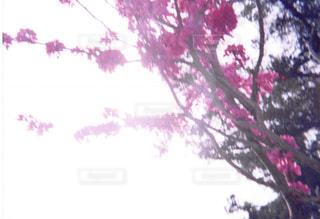 近くの木のアップの写真・画像素材[1055944]