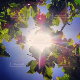 夏の日差しの写真・画像素材[2088916]