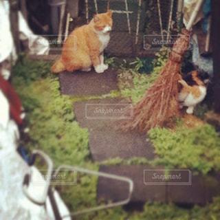 猫の写真・画像素材[2246760]