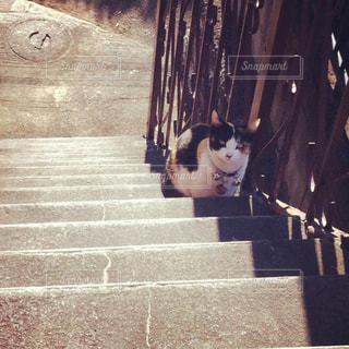 猫の写真・画像素材[2248921]