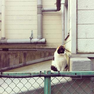 緑フェンスの上に座っている猫の写真・画像素材[2300201]