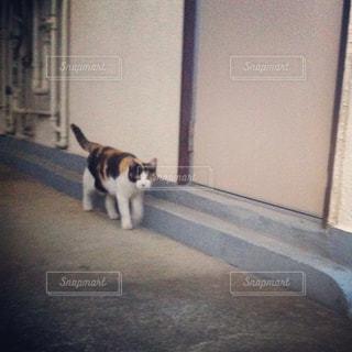 猫の写真・画像素材[2304738]