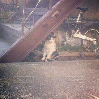 猫の写真・画像素材[2304739]