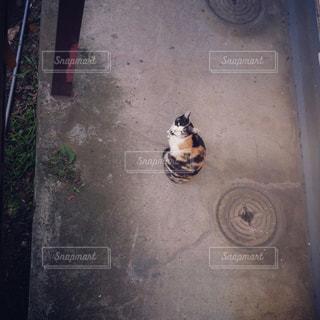 建物の上に座っている猫の写真・画像素材[2304740]