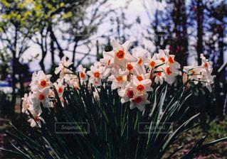春の庭の写真・画像素材[3101031]