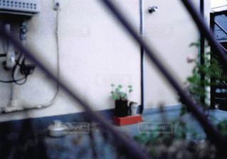 玄関先の植物の写真・画像素材[3125750]