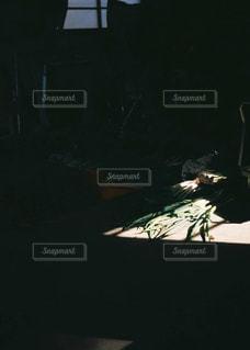 ねぎの写真・画像素材[3199002]