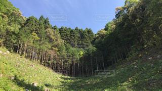 緑豊かな森の写真・画像素材[1164644]