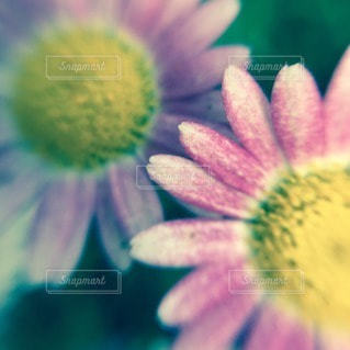 花の写真・画像素材[43986]