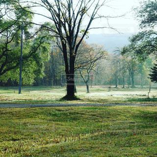 森の写真・画像素材[1990021]