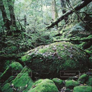 森の写真・画像素材[1150197]