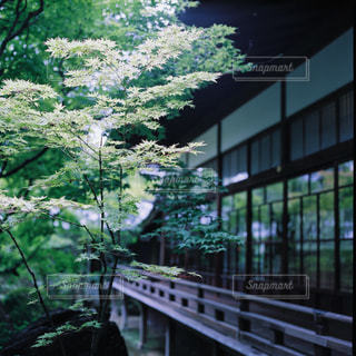 日本家屋の写真・画像素材[1150218]