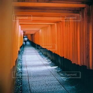 伏見稲荷の写真・画像素材[1151674]
