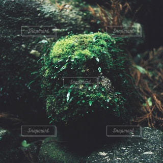 屋久島の自然の写真・画像素材[1151698]