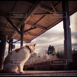 猫の写真・画像素材[1151762]