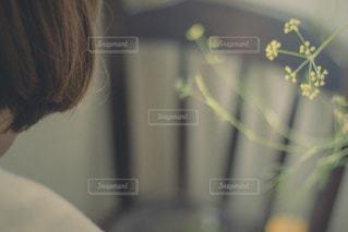 後ろ姿の写真・画像素材[1153033]